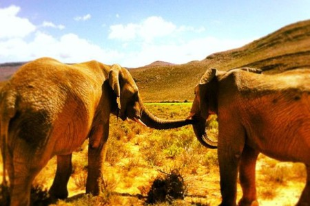 Safari drives outside Cape Town