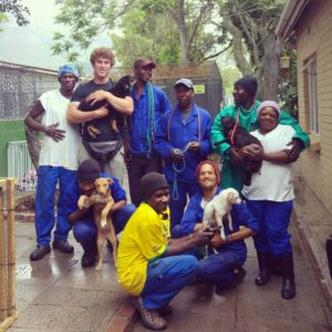 cape town internship, LTC, Volunteer South Africa, volunteer with animals