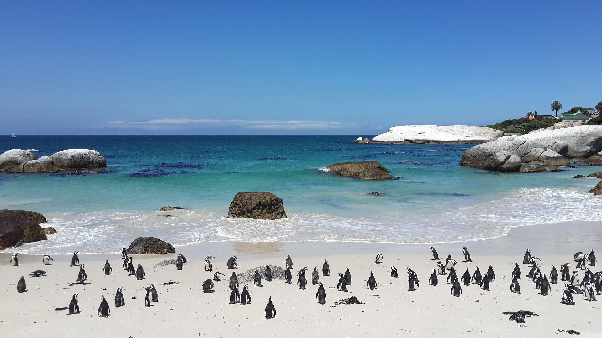 What activities to do in and around Cape Town